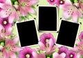 Photo framework, album page 3 Royalty Free Stock Photo