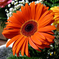 Photo gerbera blossom flower plant bouquet composition Royalty Free Stock Photo