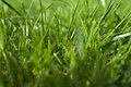 Photo grass grass background grass in sunlight part of the meadows juicy green Stock Images