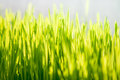 Photo of green grass at sunny day closeup Stock Images