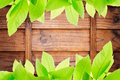 Photo of green leaves on wood block wall texture Stock Photo