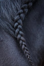 Photo of horse mane with pigtail Royalty Free Stock Photo
