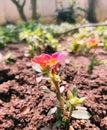 Photo of little flower in mini garden