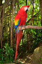 Photo macaw parrot perched branch tropical jungle Royalty Free Stock Photos