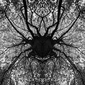 Photo manipulation tree black and white mandala abstract art Stock Images