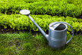 Photo of metal watering can on grass at garden Royalty Free Stock Photo