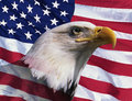Photo montage: American bald eagle and American flag Royalty Free Stock Photo