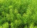 Přírodní zelená tráva vzor na jaře