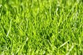Photo of nice grass Stock Photos