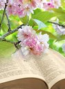 Springtime blossom open bible Royalty Free Stock Photo