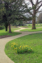 Photo peaceful meandering park path whitstable kent daffodils foreground Stock Photography