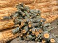 Photo with peeled wooden logs, saw log texture Royalty Free Stock Photo