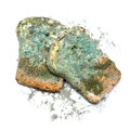 Photo of a piece of the gray bread covered a mold on a white background Royalty Free Stock Images