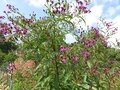 Purple Flowers and Sky During Summer Royalty Free Stock Photo