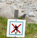 The photo of a songbird in high tatras slovakia Stock Image