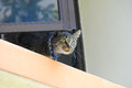 Photo taken domestic cat apartment window ledge Stock Image
