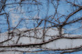 A photo taken on some vines and trailing stems on a faded blue wall Royalty Free Stock Images
