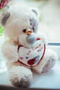 Photo of teddy bear with wedding rings Royalty Free Stock Photo
