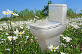 Photo toilet summer meadow depicting bringing freshness outdoors indoors Stock Images