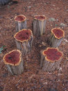 Photo of Tree Stumps Royalty Free Stock Photos