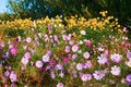 The pink flowers and yellow flowers