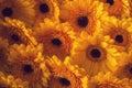 Photo Of Yellow Gerberas, Macr...