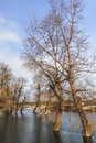 Photograph of flooded land with floating houses at sava river early spring shot dusk risen water level along its banks leafless Royalty Free Stock Images