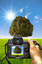 Photograph the nature Royalty Free Stock Image
