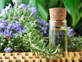 Photograph showing bottle rosemary aromatherapy oil Royalty Free Stock Image