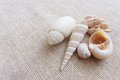 A photograph showing a few light color sea shells on natural light brown linen shells are in different shapes and species types Royalty Free Stock Photos