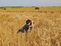 Photographer in cornfield Royalty Free Stock Photo