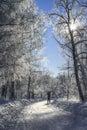 Photographer in  a frozen park. Stock Photos