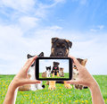 Photographing pets smartphone on the green lawn Stock Photos