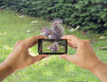 Photographing a squirrel tourist holds up camera mobile at st james park in london england Stock Photo