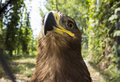 Photos of the proud eagle Royalty Free Stock Photo