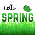 Phrase Hello Spring from grass Royalty Free Stock Photo