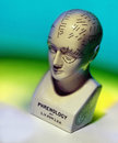Phrenology head is the detailed study of the shape and size of the cranium as a supposed indication of character and mental Royalty Free Stock Photo