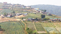 Phu resorts serene mountain views from above and cabbage plants Stock Photography