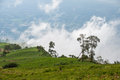Phu thap withdraw mountain in thailand Stock Photography