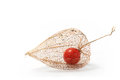 Physalis alkekengi chinese lantern isolated on white background Royalty Free Stock Photo