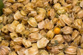 Physalis also known as winter cherries, cape gooseberries, ground cherries, love in cage or chinese lantern, aguaymanto. Royalty Free Stock Photo