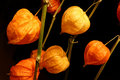 Physalis on black Royalty Free Stock Image