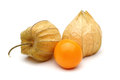 Physalis-Gruppe Stockbild