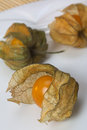 Physalis is a plant of a genus that includes the cape gooseberry and chinese lantern which has an inflated lantern like calyx the Royalty Free Stock Photography