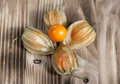 Physalis on the wooden background group of Royalty Free Stock Image