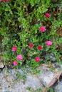 Piękni kwiaty grass fotografię Fotografia Stock