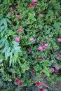 Piękni kwiaty grass fotografię Fotografia Royalty Free