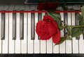 Piano keyboard and red rose Royalty Free Stock Photo