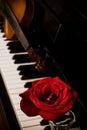 Piano keyboard and rose Royalty Free Stock Photo