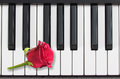 Piano keys and red rose, romantic music Stock Photography